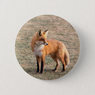 Roter Fox auf einem Gebiet Runder Button 5,1 Cm