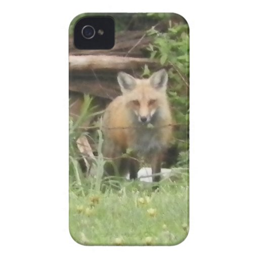 Roter Fox-BlackBerry-mutiger Kasten iPhone 4 Case-Mate Hülle
