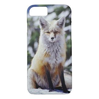 Roter Fox, der auf Schneebank, Vulpes, Mt. sitzt iPhone 8/7 Hülle