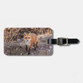 Roter Fox herauf nahes und persönliches Kofferanhänger