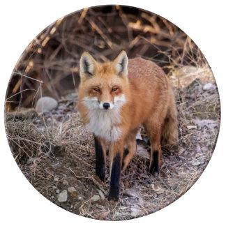Roter Fox herauf nahes und persönliches Porzellanteller