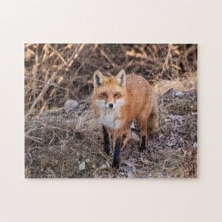 Roter Fox herauf nahes und persönliches Puzzle