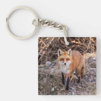 Roter Fox herauf nahes und persönliches Schlüsselanhänger