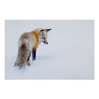 Roter Fox im Winter Poster