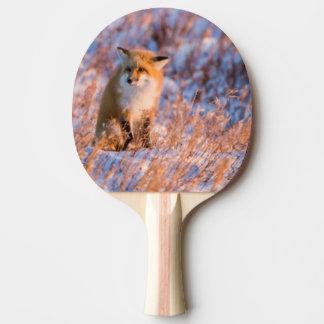 Roter Fox in Winter Churchill wild lebenden Tieren Tischtennis Schläger