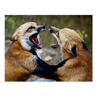 Roter Fox-Kampf Postkarte