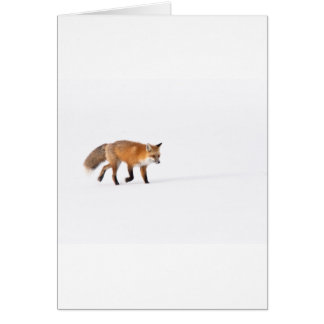 Roter Fox Karte