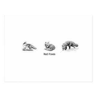 Roter Fox-Linie Kunst (betitelt) Postkarte