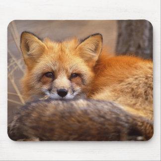 Roter Fox Mauspads
