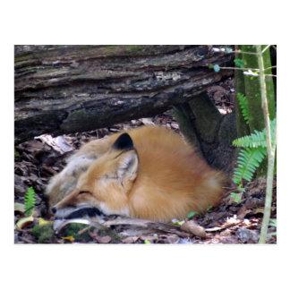 Roter Fox-Postkarte Postkarte