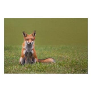 Roter Fox-Sitzen Holzdruck