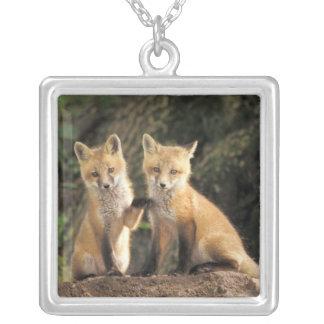 Roter Fox-Welpe vor Höhle Vulpes Vulpes) Versilberte Kette