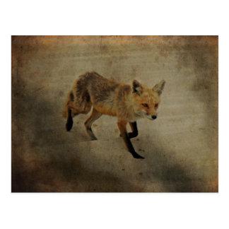 Roter FoxVixen - Insel-Strand-Staats-Park - NJ Postkarten