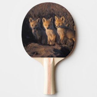 roter Fuchs, Vulpes Vulpes, Ausrüstungen außerhalb Tischtennis Schläger