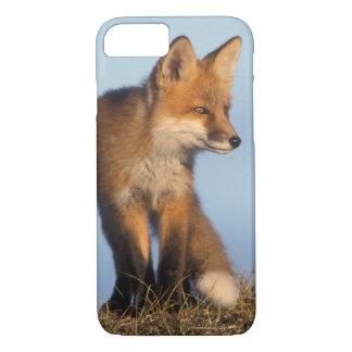 roter Fuchs, Vulpes Vulpes, im 1002 Bereich von iPhone 8/7 Hülle