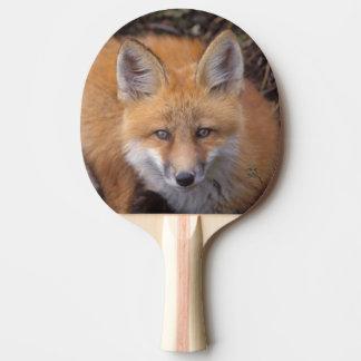 roter Fuchs, Vulpes Vulpes, in den Herbstfarben Tischtennis Schläger
