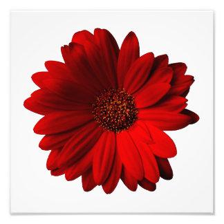 Roter Gerbera-Gänseblümchen-Foto-Druck