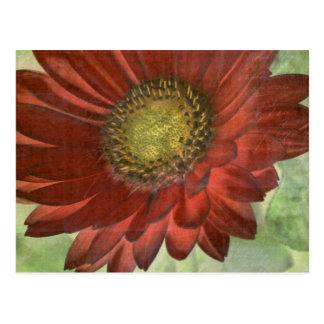 Roter Gerbera Postkarte