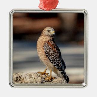 Roter geschulterter Falke auf einem Felsen Silbernes Ornament