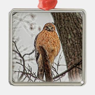 Roter geschulterter Falke in einem Baum Silbernes Ornament