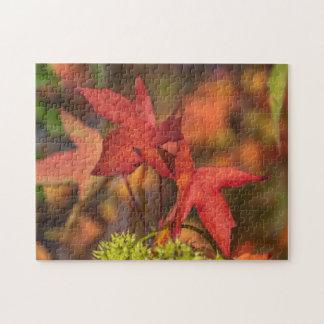 Roter Herbst verlässt Fotopuzzlespiel Puzzle