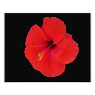 Roter Hibiskus Fotodruck