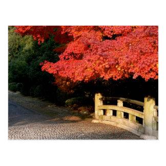 Roter japanischer Ahorn Postkarte