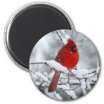 Roter Kardinal im Schnee-Magneten Magnets