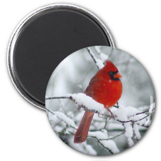 Roter Kardinal im Schnee-Magneten Runder Magnet 5,7 Cm