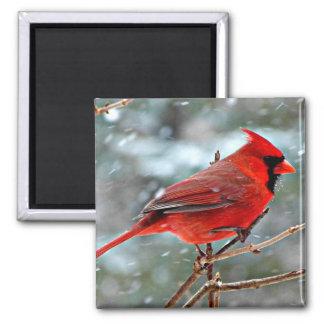 Roter Kardinal im Schnee Quadratischer Magnet