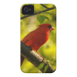 Roter Kardinals-Vogel im Baum durch Lois Bryan Case-Mate iPhone 4 Hüllen