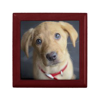 Roter Labrador Welpe Fox Erinnerungskiste