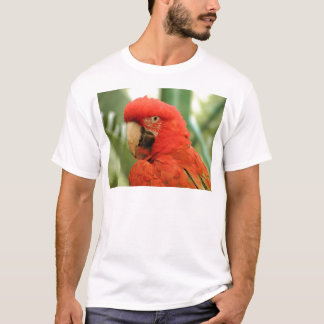 Roter Macaw T-Shirt