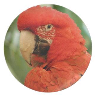 Roter Mackaw Papagei Flache Teller