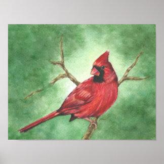 Roter männlicher Kardinal im Baum Poster