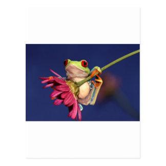 roter mit Augen Baumfrosch Postkarte
