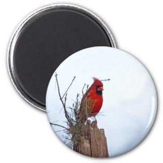 Roter NordKardinal, der auf einem hölzernen Posten Runder Magnet 5,1 Cm