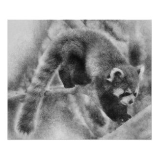 Roter Panda auf einer Niederlassung Poster