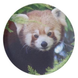 Roter Panda Flache Teller