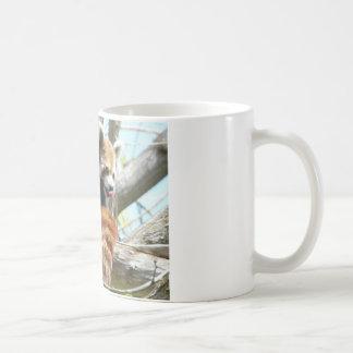 roter Panda lickin Kaffeetasse
