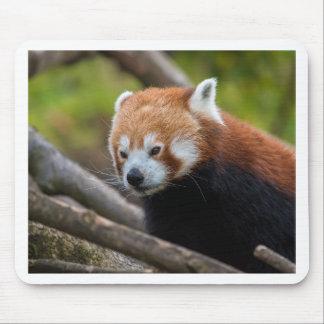Roter Panda Mousepads