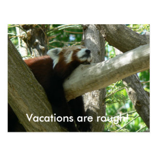 Roter Panda-Postkarte Postkarte