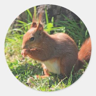 Roter schöner Fotoaufkleber des Eichhörnchens, Runder Aufkleber