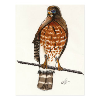 Roter Schwanz-Falke Postkarte