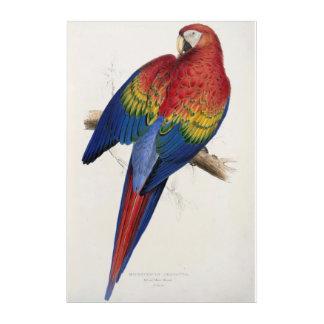 Roter und gelber Macaw durch Edward Lear Acryl Wandkunst