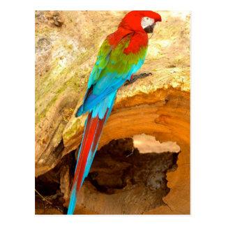 Roter und grüner Macaw, Trinidad-Postkarte Postkarte