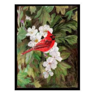 Roter Vogel auf Weißdorn-Blumen Postkarte
