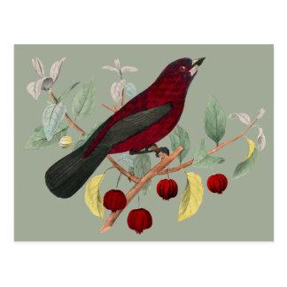 roter Vogel des Herbstes Vintag Postkarte