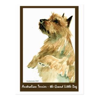 Rotes australisches Terrier Postkarte