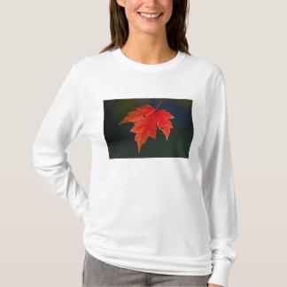 Rotes Blatt Rotahorn-Acerrubrum) im Herbst, T-Shirt